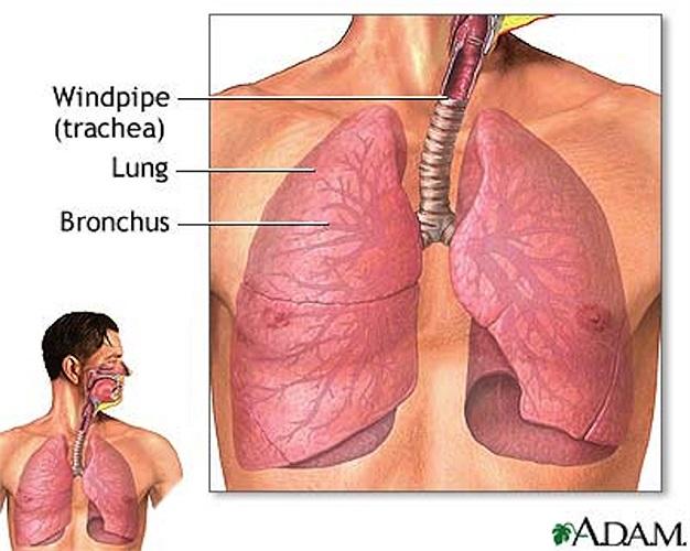 3. Nhiễm khuẩn đường hô hấp dưới: Có hai loại nhiễm trùng đường hô hấp dưới là viêm phế quản và viêm phổi. Một số triệu chứng phổ biến của các bệnh nhiễm trùng đường hô hấp là chảy nước mũi, hắt hơi, nhức đầu và đau cổ họng.
