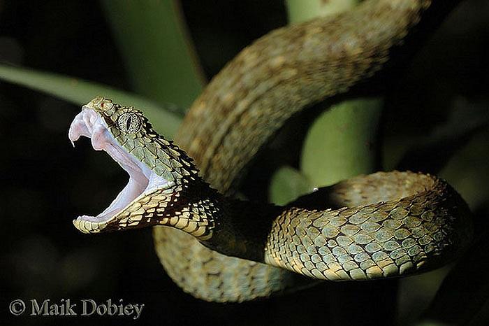 Chúng chỉ mới được phát hiện từ cách này khoảng 30 năm bởi các nhà sinh vật đến từ châu Âu.