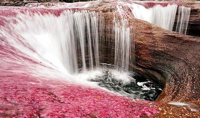"""Chính """"cây thần"""" này đã biến một dòng sông đơn điệu, u buồn thành chốn lung linh, vô thực."""