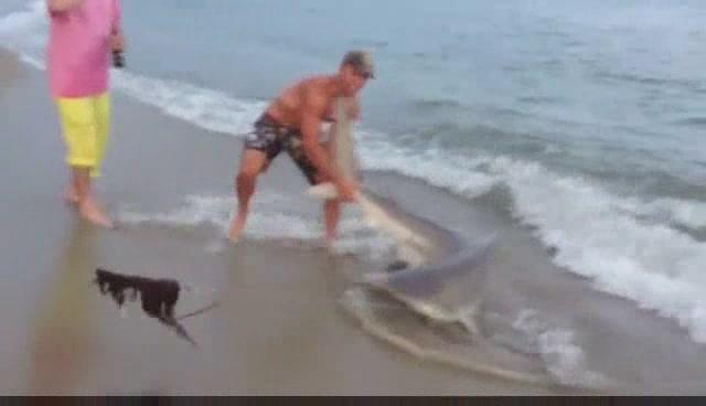 hỗn chiến cá mập