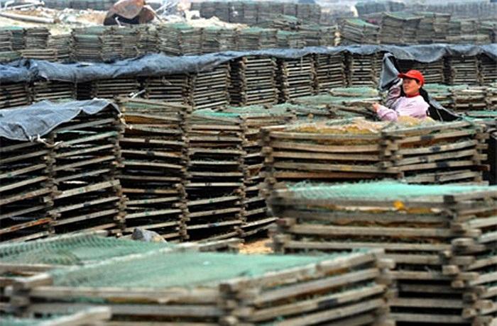 La liệt gelatine khô được phơi trên những tấm lưới