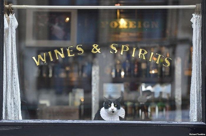 Chú mèo bên trong một cửa hàng rượu ở London