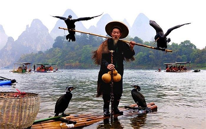 Ngư dân già và những con chim cốc dùng để bắt cá ở khu tự trị Choang, Quảng Tây