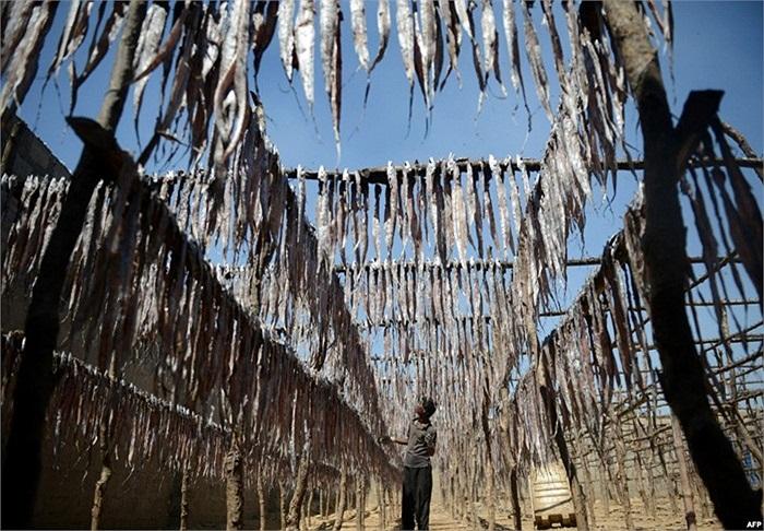 Ngư dân vùng Karachi, Pakistan phơi khô cá