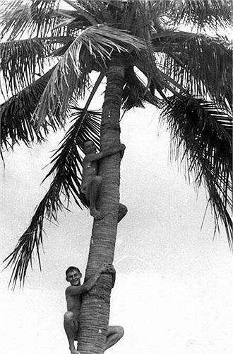 Binh lính Liên Xô giải trí bằng cách leo cây dừa tại Cam Ranh