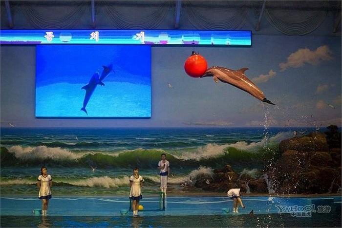 Tiết mục biểu diễn của các chú cá heo ở Bình nhưỡng