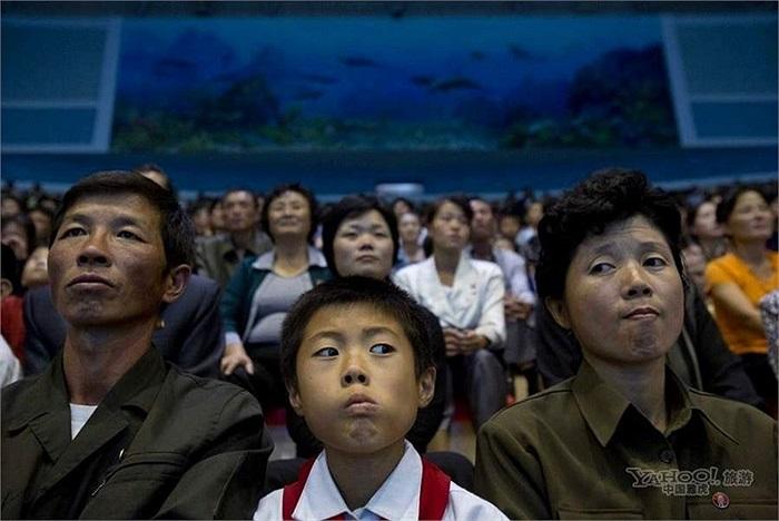 Xem cá heo biểu diễn ở Bình Nhưỡng