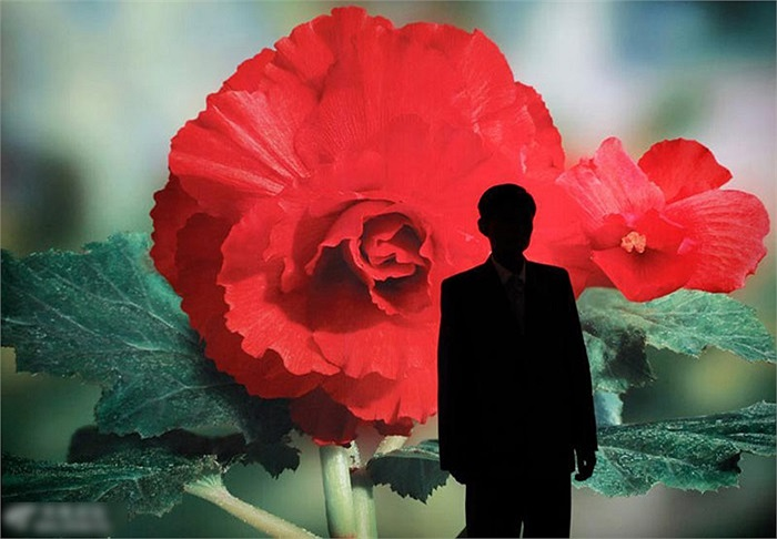 Một người đàn ông chụp ảnh lưu niệm với tấm áp phích in hình hoa Kinh Chính Nhật ở Bình Nhưỡng