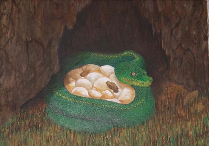 Sống trên cây và cả dưới nước, song nó lại tìm hang động để đẻ. Mỗi lứa từ 6-14 quả trứng.