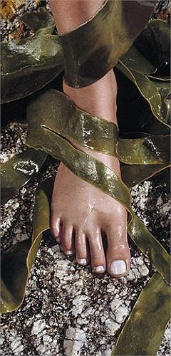 Bí quyết làm đẹp mới của Victoria Beckham: Rong biển.