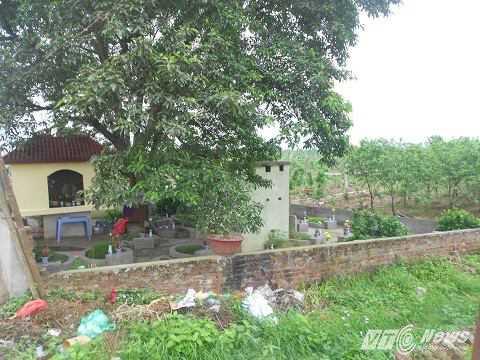 Khu nghĩa địa nằm trong một góc của vườn đào Nhật Tân