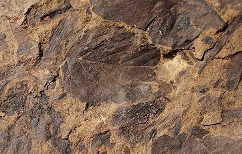 Tìm thấy hàng trăm mảnh hóa thạch cháy đen ở nhiều điểm khai quật tại Patagonia. Ảnh Dailymail
