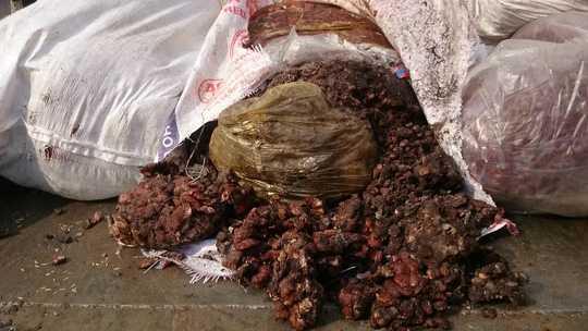 Hàng tấn me bẩn được phát hiện đang chảy nước nhão nhoét, màu đen sì, vón cục...