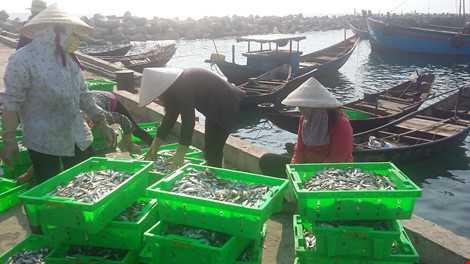 Trong sáng 5-5, ngư dân xã Kỳ Lợi vẫn nhộn nhịp thu gom cá biển từ các thuyền vừa cập bến. Ảnh: TP