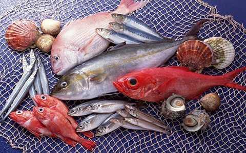 Cá bị nhiễm độc: Làm sao để phân biệt?