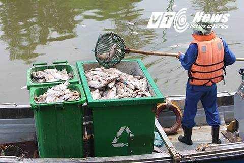 Công nhân môi trường vẫn đang nỗ lực vớt số cá chết nổi trên kênh