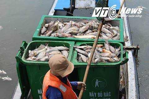 Những thùng cá chết chất đầy được công nhân môi trường trục vớt