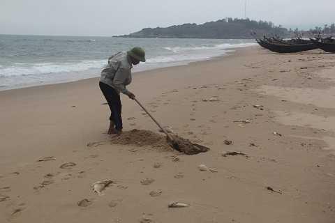 Không chờ được chính quyền xử lý, người dân xử lý bằng cách tự dập cá chết ngay tại chỗ.