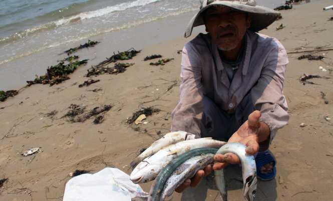 Cá chết bất thường ở miền Trung khiến dư luận hoang mang.