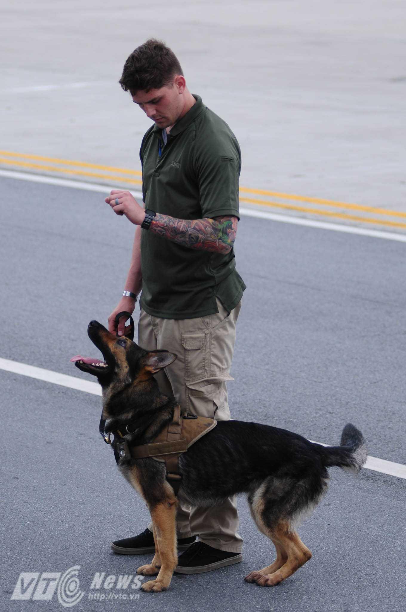 Những chú chó rất nhanh nhẹn, tinh nhuệ - Ảnh: Tùng Đinh