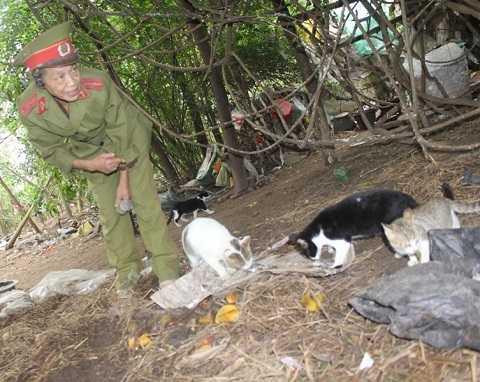 Trong khu nghĩa địa này, bà Huệ nuôi hơn 20 con mèo hoang cùng 3 con bò