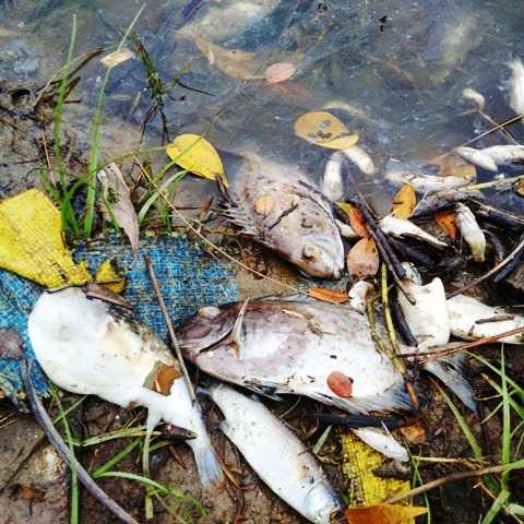 UBND tỉnh Thừa Thiên - Huế có quyết định hỗ trợ khẩn cấp cho ngư dân vùng bị ảnh hưởng do cá chết hàng loạt.