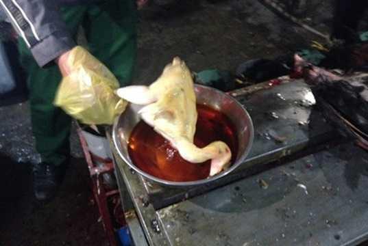 Người tiêu dùng khi thường xuyên ăn loại gà ngâm hóa chất sẽ đối mặt với những tổn hại nghiêm trọng về sức khỏe. Hóa chất để nhuộm vàng da thịt gà rất độc hại, có thể gây ra bệnh sơ gan, phù phổi, thậm chí dẫn đến tử vong. Ớn lạnh với hình ảnh nhuộm gà bằng hóa chất. Ảnh minh họa.