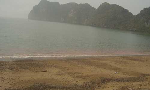 Thủy triều đỏ từng xuất hiện bờ biển Bình Thuận. Ảnh: Viện Hải dương học Nha Trang.