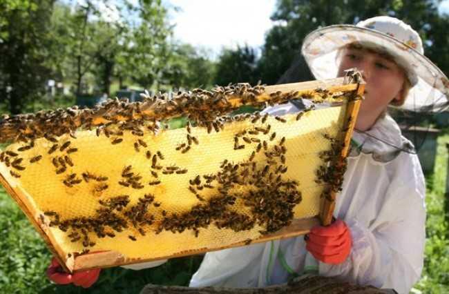 Nuôi ong: Hơn 100 trường học tại Bashkiria đã xây dựng khu nuôi ong riêng. Tại đây, trẻ em được học cách bảo vệ tổ ong và lấy mật. Môn học giúp học sinh rèn luyện tính kiên nhẫn, tập trung và chính xác.