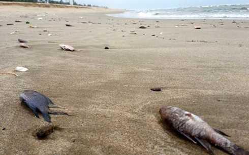 Hiện tượng cá chết bất thường ở miền Trung đang là mối quan tâm của rất nhiều người