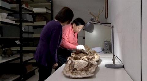 Đây là bộ xương gây ấn tượng nhất trong 48 bộ xương được khai quật. Ảnh Huffingtonpost