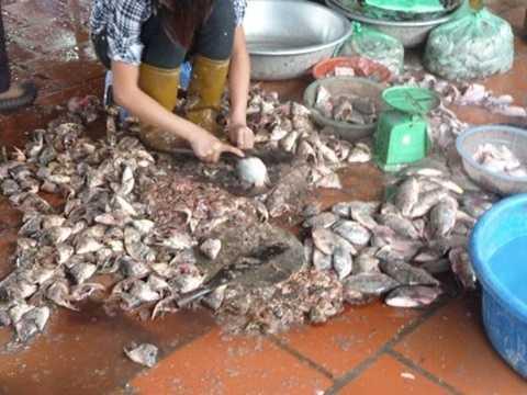 Tất cả các công đoạn làm cá đều diễn ra trên nền gạch cực bẩn, nhem nhuốc ở chợ. Ảnh: DNVN.