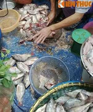 Cận cảnh những con cá đã ươn thối, trắng bệch nhưng vẫn được các lái buôn kỳ công thái lóc thịt. Sau đó, số cá ế này sẽ được đóng gói rồi cung cấp cho các hàng bún cá với giá rẻ. Ảnh:Lê Phương.