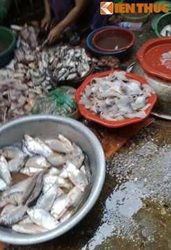 Cận cảnh chế biến món cá ươn thối, mất vệ sinh, ngậm nhiều vi khuẩn ảnh hưởng nghiêm trọng đến sức khỏe của người dùng. Ảnh:Lê Phương.