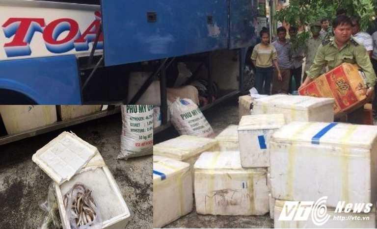 Thương lái thuê xe khách chở gần 500kg cá đục chết vào miền Nam tiêu thụ.