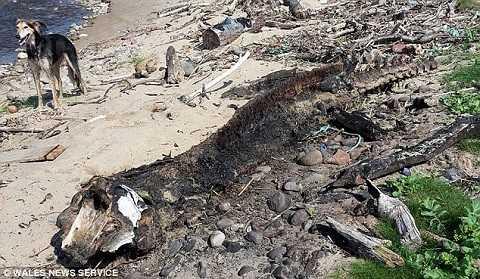 Quái vật được phát hiện bên bờ biển Morfa.(Ảnh Dailymail)