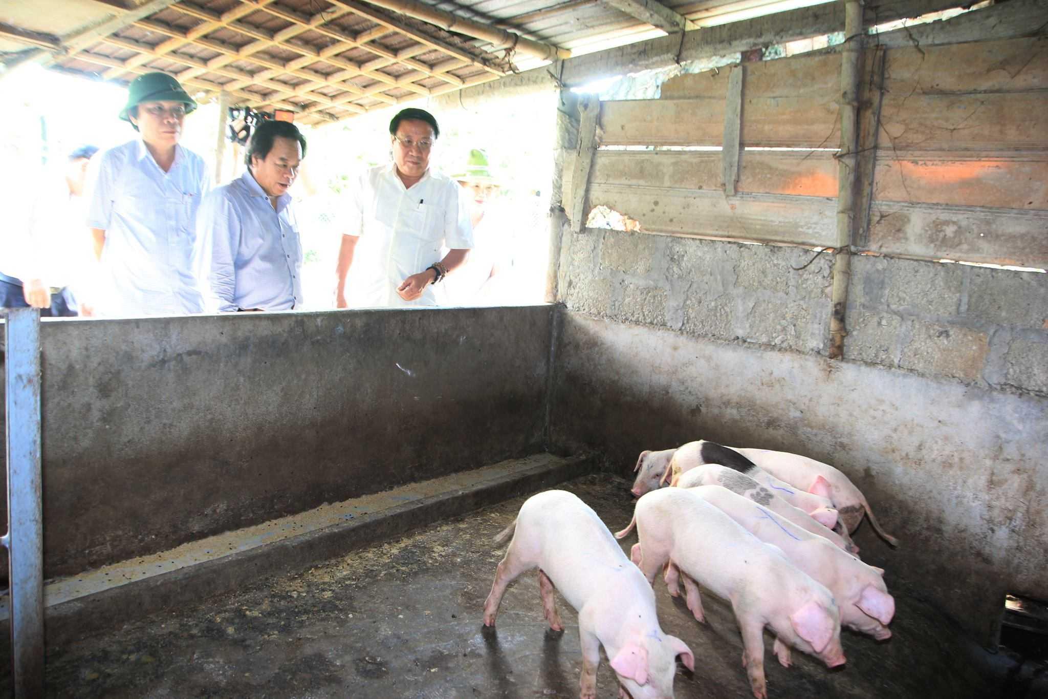 Đoàn công tác đi kiểm tra dịch lợn tai xanh ở Quảng Trị.