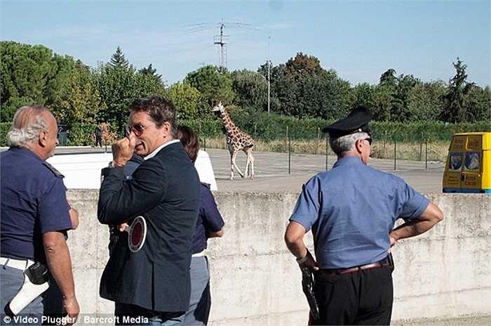 Các nhân viên an ninh được huy động để vây bắt hươu cao cổ sau khi đã lùa được chú tới một công viên vắng người