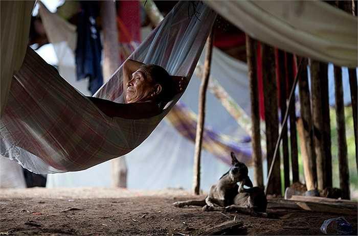 Ông lão người gốc Ấn Độ nằm nghỉ trưa trên chiếc võng trong khu lều tạm ở Irotatheri, Venezuela