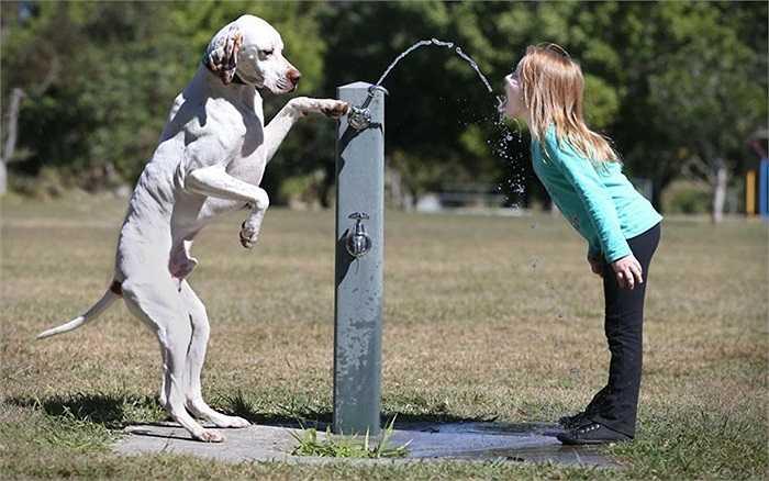 Chú chó giữ van nước cho cô chủ nhỏ của mình