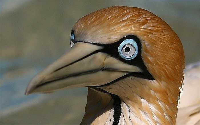 Một chú chim trong vườn bảo vệ động vật Cape Town, Nam Phi