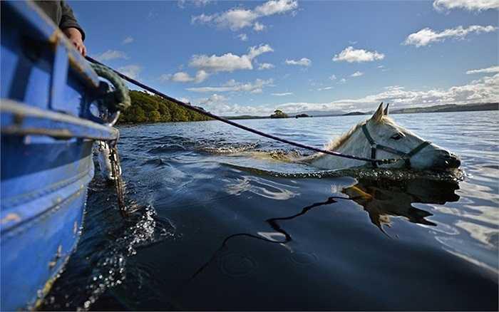 Chú ngựa đang luyện tập bằng cách chạy dưới lòng sông tại Luss, Scotland