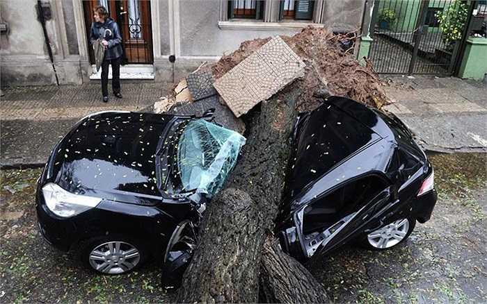 Cơn bão nhiệt đới khiến cây đổ dè bẹp xe hơi tại Montevideo, Uruguay