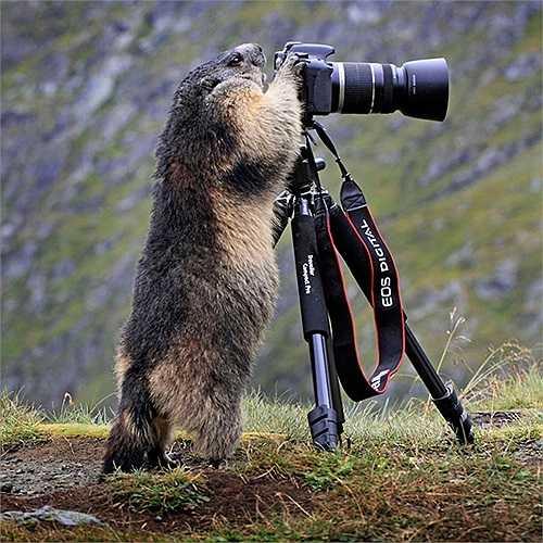 Chú sóc nghịch máy ảnh của các nhiếp ảnh gia động vật
