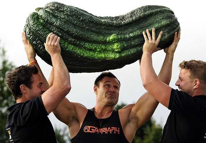 Hình ảnh quả bí khổng lồ nặng 54.3 kg tại triển lãm rau củ khổng lồ hàng năm tại Harrogate, Anh