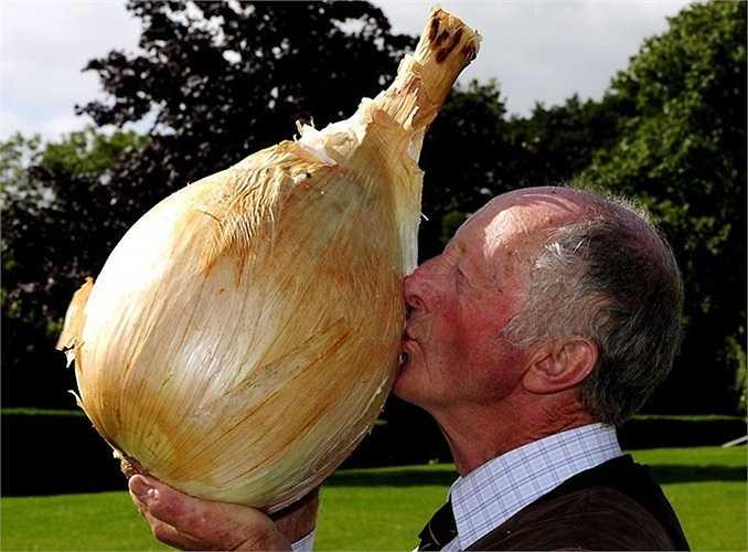 Củ hành khổng lồ nặng 8.3 kg tại triển lãm rau củ khổng lồ ở Harrogate, Anh