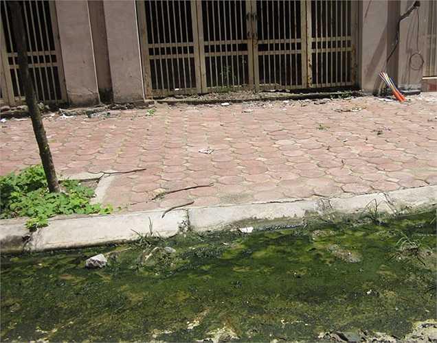 Trước cửa nhiều căn biệt thự, các vũng nước đọng lâu ngày đen ngòm và mọc rêu xanh.