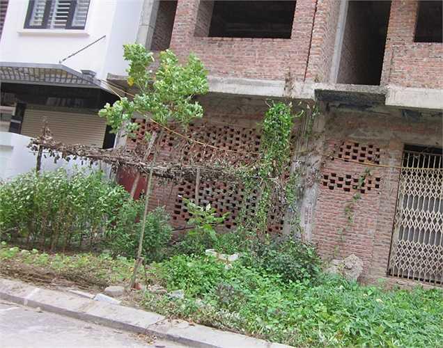 Trước cửa nhiều căn biệt thự, người dân tranh thủ trồng rau sạch.