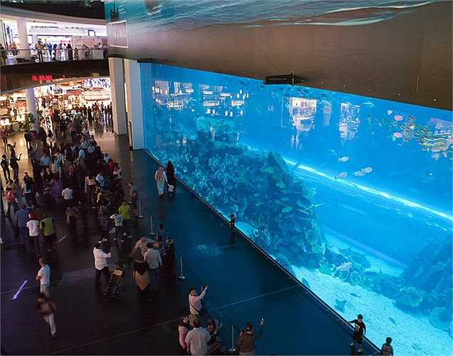 Khu thủy sinh trong trung tâm là nơi sinh sống của hơn 3.300 loài sinh vật biển. Tấm biển làm bằng axit acrilic trong suốt, giúp du khách ngắm nhìn thế giới đại dương, cũng đã có tên trong sách kỷ lục Guinness.