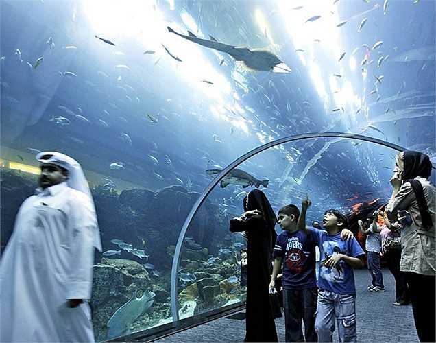 Còn có một đường hầm giúp du khách như đang đi lại giữa lòng đại dương.